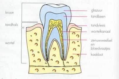 Bang voor de tandarts - 1 3